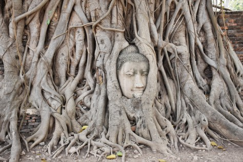 Buddha Face in Tree Roots Wat Mahathat Ayutthaya Buddhist Ruins World Heritage Site Travel Thailand Tourist Attraction Sacred Site